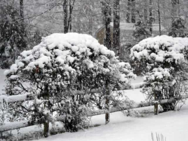 More Winter Weather (Image 1)_14191
