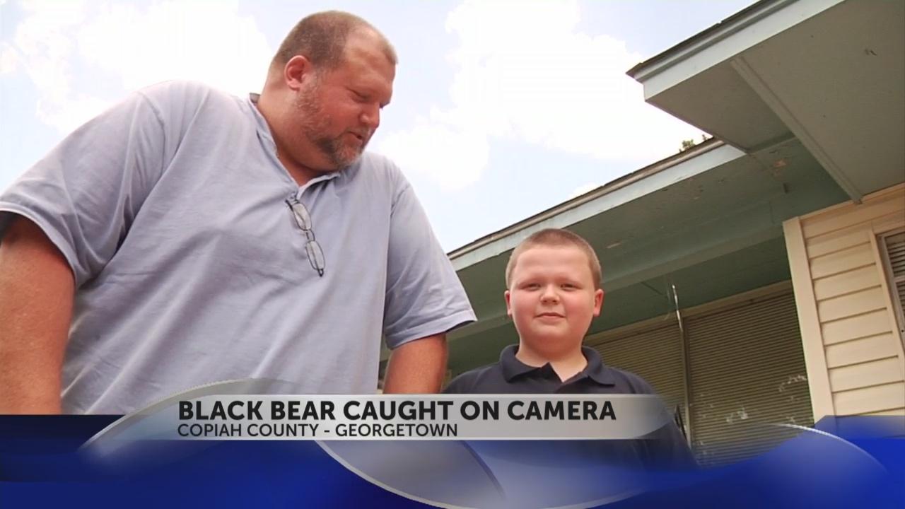 black bear on cam_44712