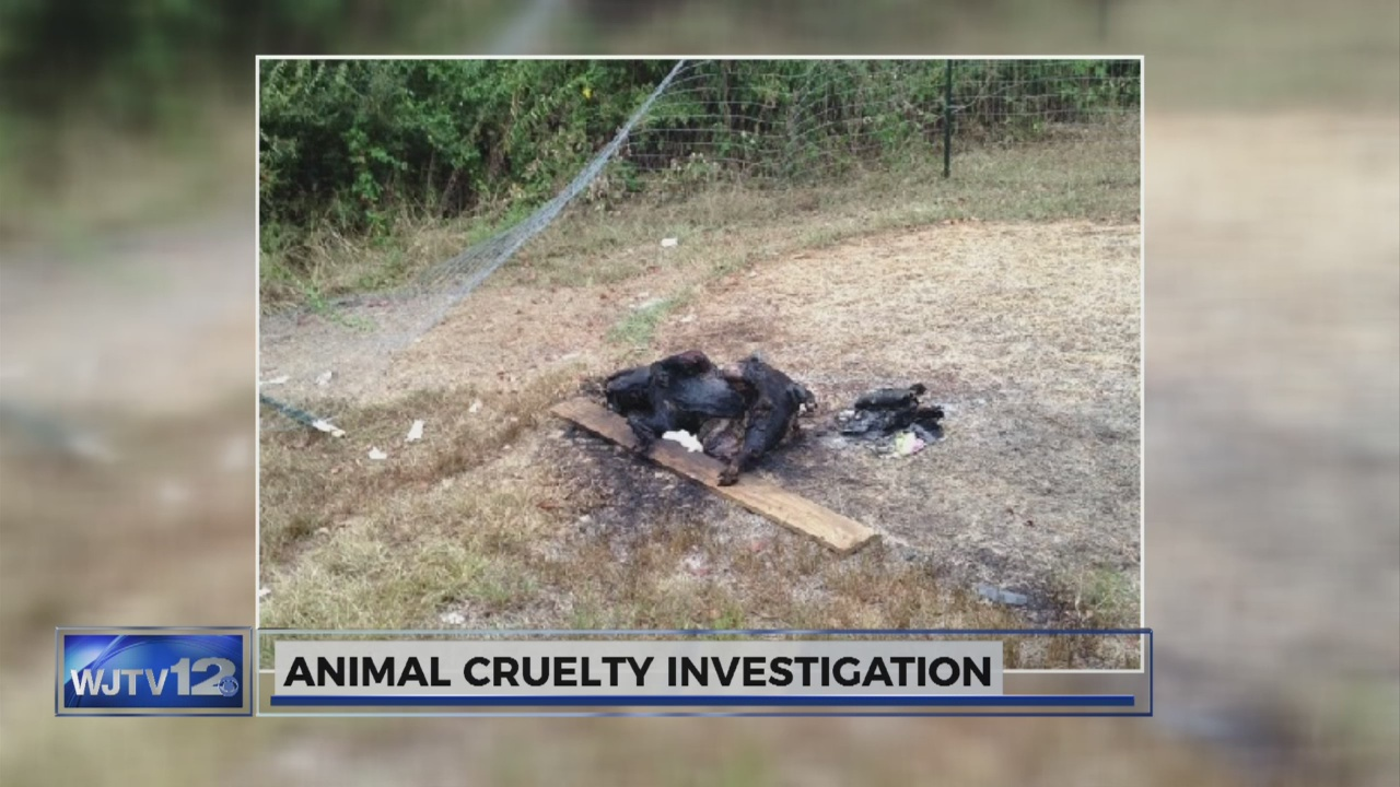 Community members and animal activists outraged after Winona police find burned dog