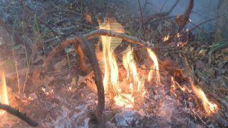 FIRE00000012_80306