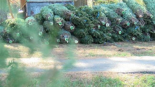 trees_102048