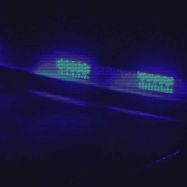 Blue Police Lights Generic_149820