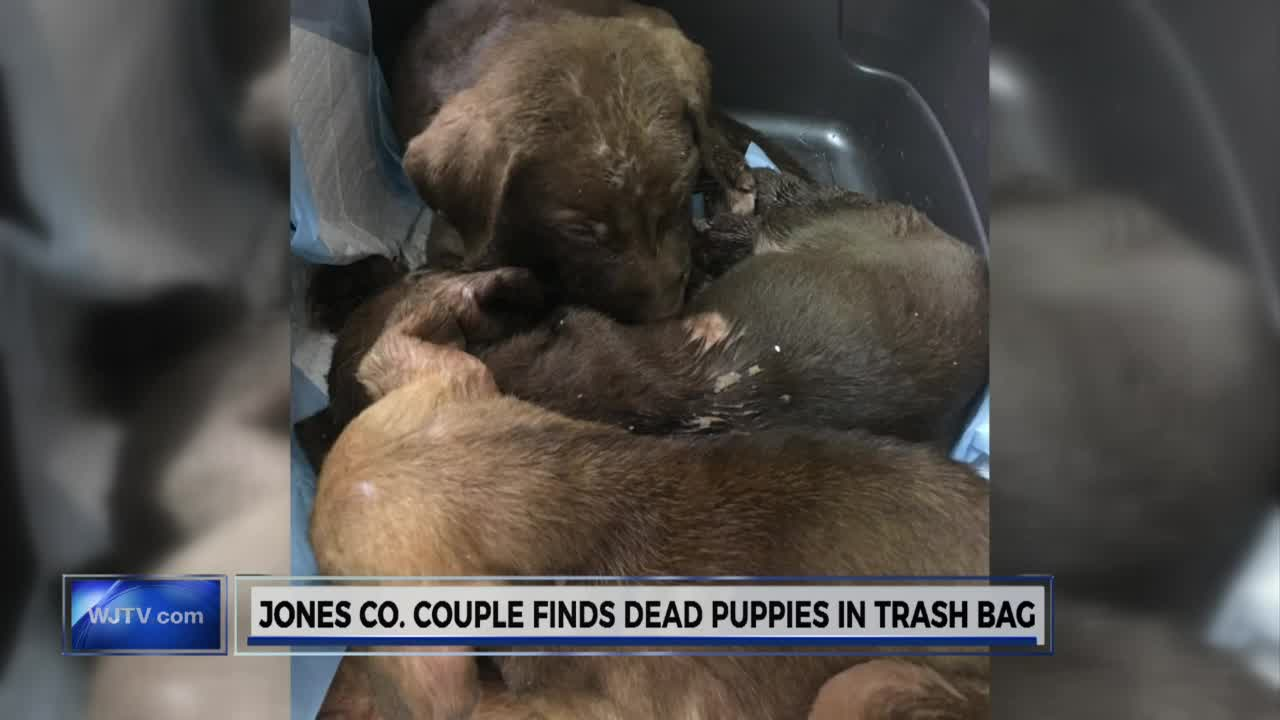 puppies in trash bags_211194