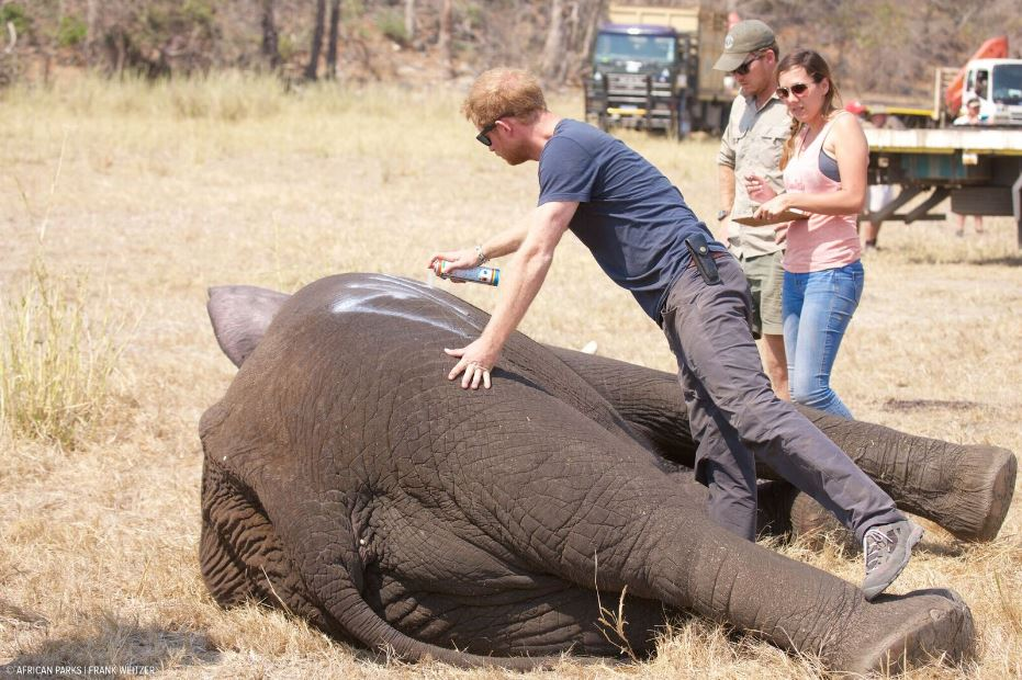 prince-harry-and-elephant-by-frank-weitzer-african-parks_234884