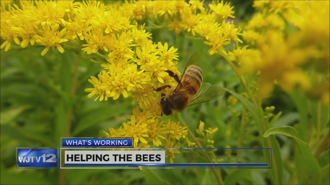 bees_237167