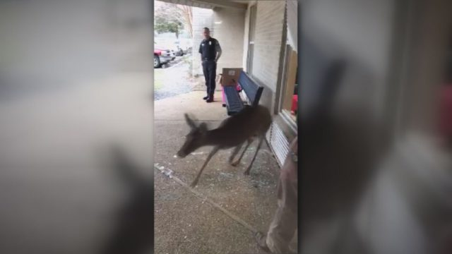 deer-in-school_263864