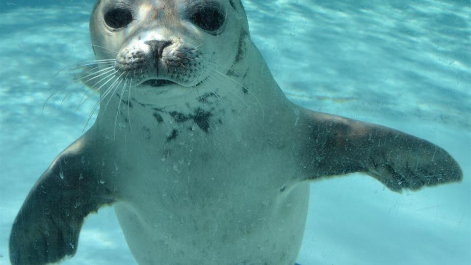 Photo_ Mystic Aquarium_433632