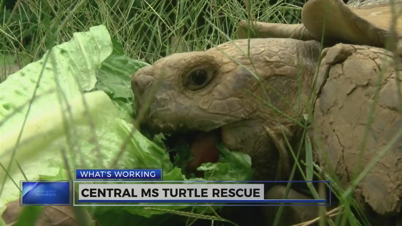 What's Working: Central Mississippi Turtle Rescue