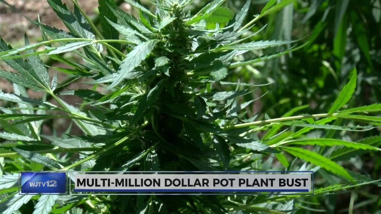 multimillion pot pust_412256