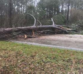Rankin county downed trees_1547911677001.JPG.jpg