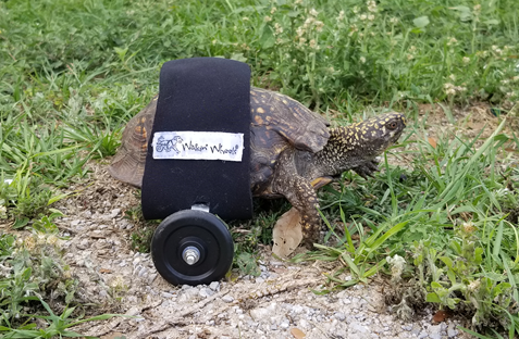 INJURED TURTLE_1557855719257.png-842137442.jpg