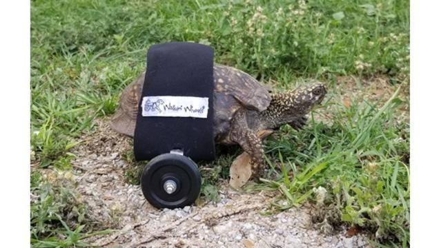 turtle_1558108777442.jpg