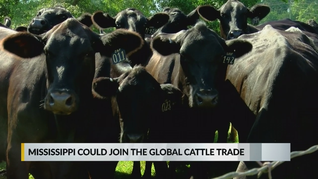 New opportunity for Mississippi ranchers to sell more beef overseas