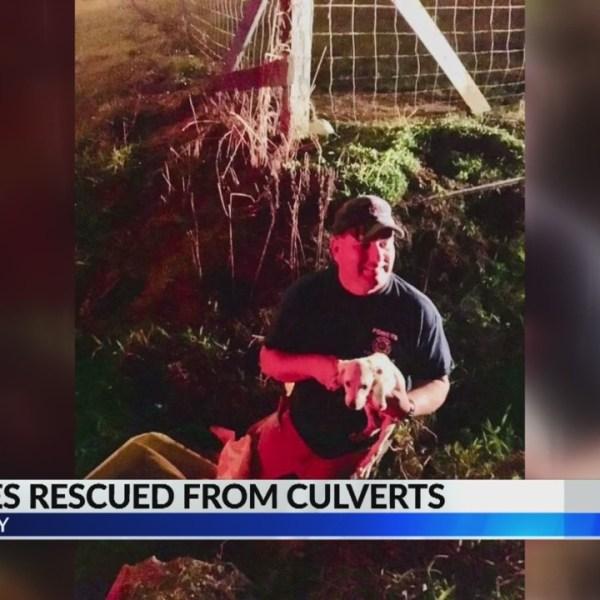 Puppies Rescued in Jones County