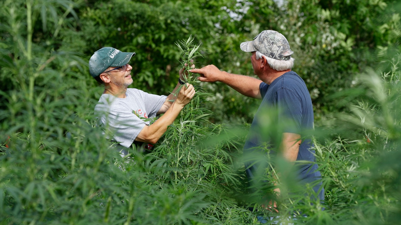 USDA accepting applications for Mississippi hemp production licenses