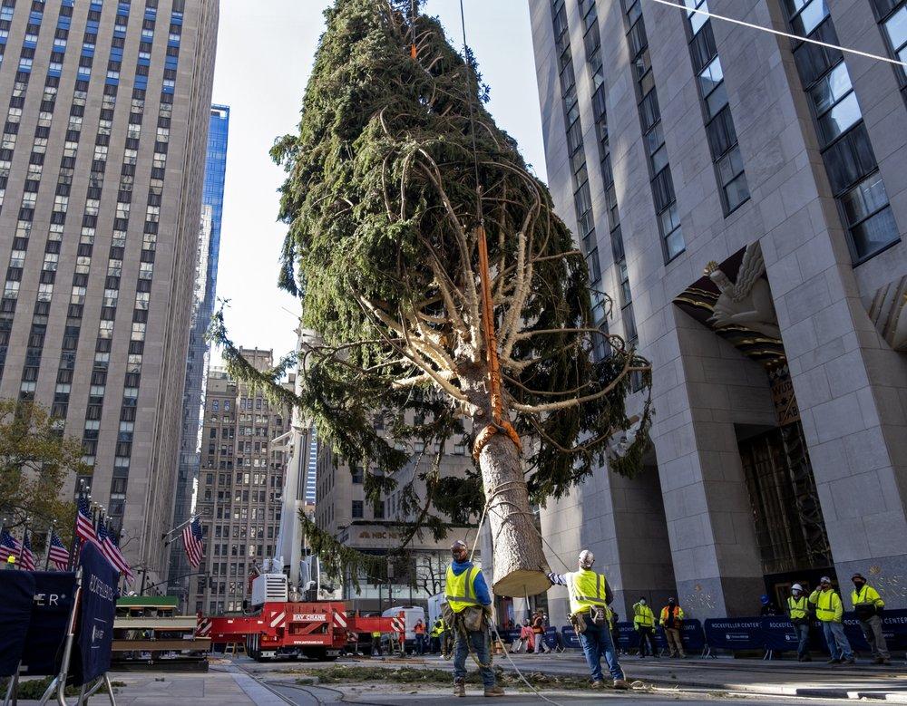 Rockefeller Center Christmas tree goes up; lighting Dec. 2   WJTV